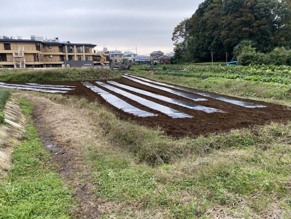 2019年11月11日(月)の作業記録 (収穫作業メイン)