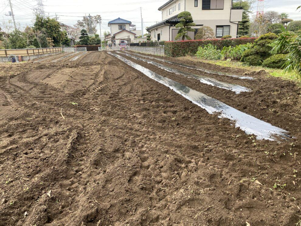 2019年11月13日(水)の作業記録 (鈴木さん畑マルチ張り)