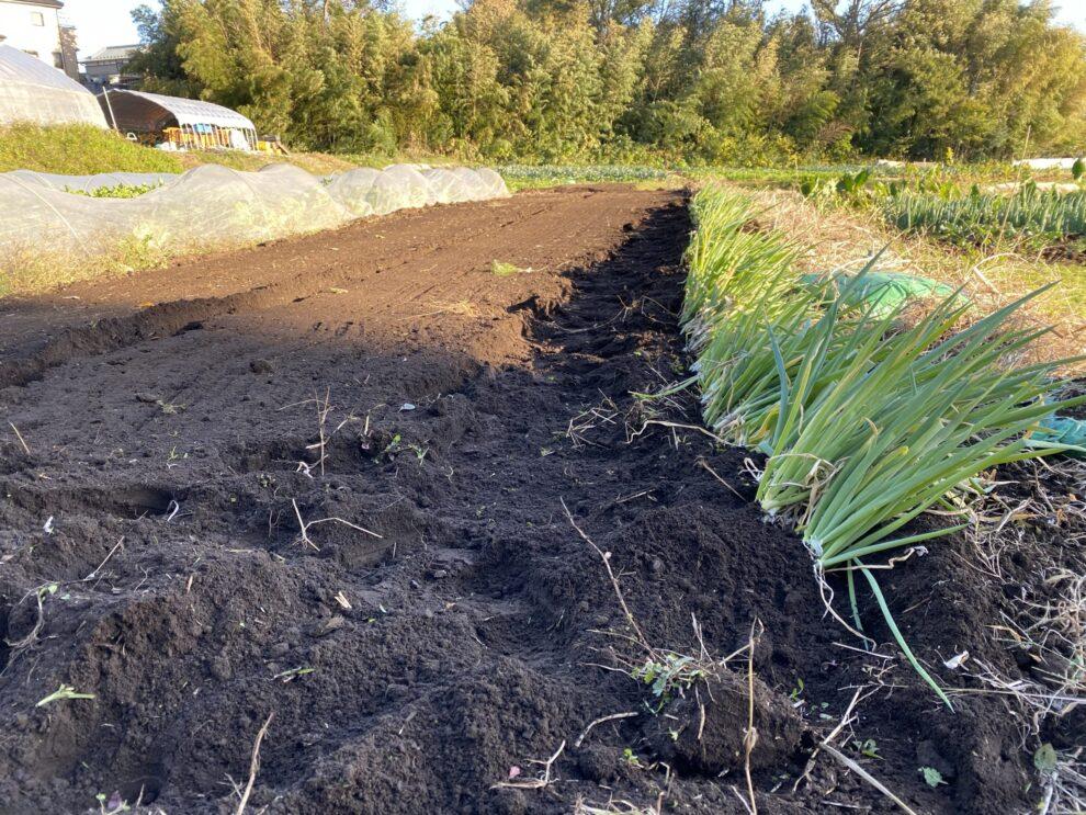 2019年11月20日(水)の作業記録 (慈恩寺畑で小松菜の種植えと赤玉ねぎの定植)