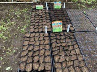 2019年11月28日(木)の作業記録 (畑の整理整頓作業、スナップエンドウ、さやエンドウ種蒔き)