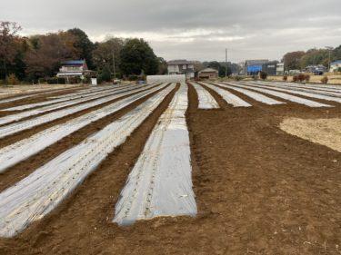2019年12月10日(火)の作業記録 (小溝の玉ねぎ畑での玉ねぎ定植作業中心)