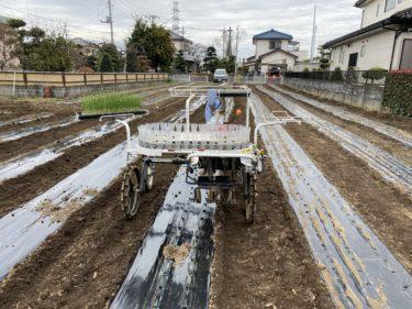 2019年12月25日(水)の作業記録 (鈴木さん畑でマルチ張りと玉ねぎ定植作業)