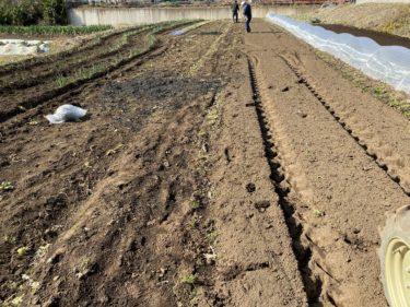 2020年2月19日(水)の作業記録 (吉岡さん畑の玉ねぎ追肥作業、吉岡さん畑の山部分の石とゴミ拾い作業、竹炭まき)