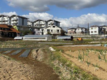 2020年3月9日(月)の作業記録 (吉岡さん畑の山部分の石拾い、斉藤さん畑でかぶの種蒔きと防虫ネット張り)