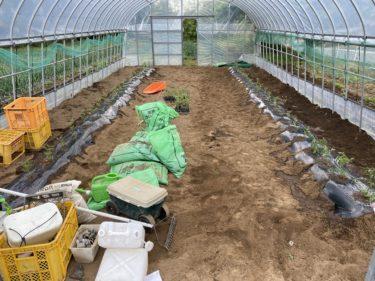 2020年5月4日(月)の作業記録 (水やり作業、ミニトマト定植作業)
