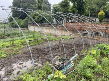 2020年6月25日(木)の作業記録 (玉ねぎの選別と根切り葉切り作業、農機具置き場の屋根の改良作業)