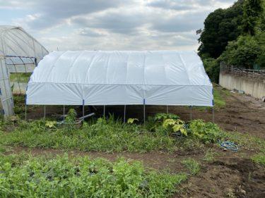 2020年6月29日(月)の作業記録 (玉ねぎ450㎏納品、農機具置き場の屋根張り終了、アスパラガスの定植作業)