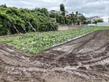 2020年7月1日(水)の作業記録 (茄子の誘引線張り、茄子の剪定作業、ミニトマトの芽搔き誘引作業)