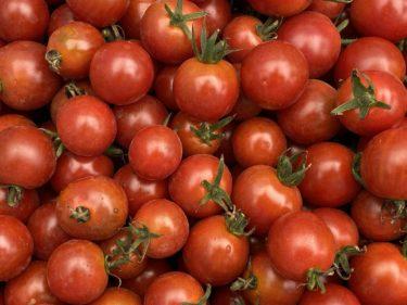2020年7月10日(金)の作業記録 (茄子の誘引作業、玉ねぎの根切り葉切り作業、畑ミーティング)
