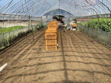 2020年8月11日(火)の作業記録 (休み明けで収穫量が多め、ブロッコリー播種作業(育苗作業))