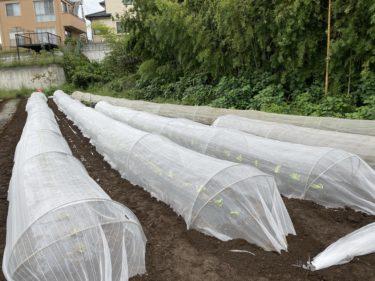 2020年9月16日(水)の作業記録 (ハンマーナイフモアでモロヘイヤ等の撤去作業、白菜の定植作業と防虫ネット張り作業)