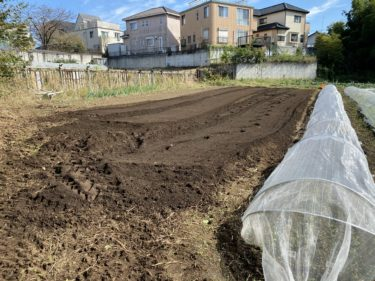 2020年10月26日(月)の作業記録 (斉藤さん畑の上の畑のツルムラサキと空芯菜を撤去)