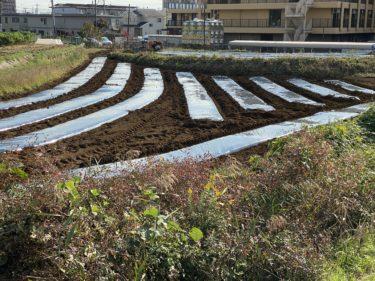 2020年10月27日(火)の作業記録 (日本ほうれん草、からし菜、ルッコラの播種作業、農林公社による玉ねぎ用のマルチ張り)