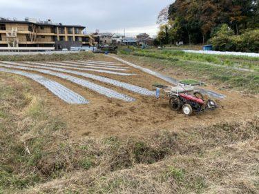 2020年11月24日(火)の作業記録 (吉岡さん畑で玉ねぎの定植作業)