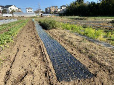 2020年12月8日(火)の作業記録 (斉藤さん畑の下の畑と鈴木さん畑で玉ねぎの定植作業、花類の植え付け)