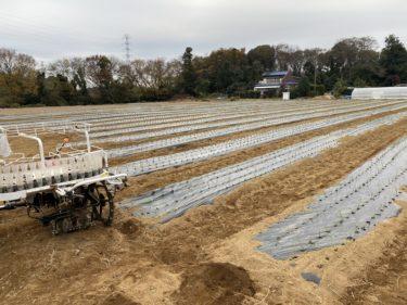 2020年12月2日(水)の作業記録 (小溝玉ねぎ畑の移植機での玉ねぎ苗の定植作業完了、移植機を鈴木さん畑移動して再び玉ねぎの定植作業)
