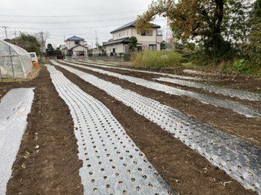 2020年12月3日(木)の作業記録 (鈴木さん畑と小溝玉ねぎ畑で玉ねぎの補植作業、移植機が動作しなくなりました)