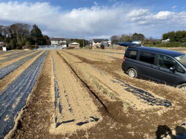 2021年2月17日(水)の作業記録 (小溝玉ねぎ畑で岩槻ネギの定植作業)