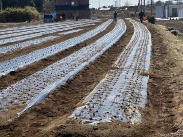 2021年2月18日(木)の作業記録 (小溝玉ねぎで岩槻ネギ定植完了、小溝玉ねぎ畑で玉ねぎの追肥作業、移植機の動作と修理について、土寄せ機のタンクの様子)