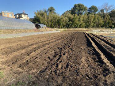 2021年2月19日(金)の作業記録 (ジャガイモの定植作業、小溝玉ねぎ畑で玉ねぎの追肥作業)