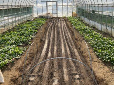 2021年2月22日(月)の作業記録 (小溝玉ねぎ畑で玉ねぎの追肥作業、鈴木さん畑のビニールハウス内でほうれん草の播種作業、土寄せ機の燃料タンクを再度取り外して錆取り剤に浸けました)