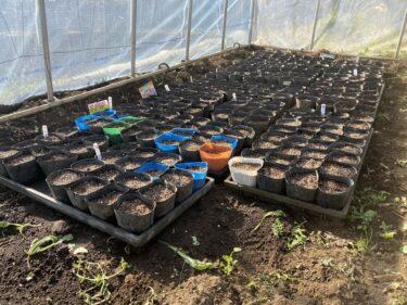 2021年3月3日(水)の作業記録 (ビーマンとジャンボシシトウと緑茄子の播種育苗作業、燃料タンク目詰まり解消後も土寄せ機の不調は改善せず)