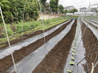 2021年5月13日(木)の作業記録 (斉藤さん畑のビニールハウス内でミニトマトの定植作業、田中さん畑で緑茄子と水茄子の定植作業、キュウリ用のマルチ張りと支柱立て作業)