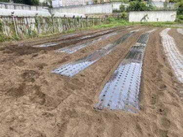 2021年5月26日(水)の作業記録 (茄子の追加定植・誘引作業、斉藤さん畑の上の畑のマルチ張り作業、吉岡さん畑の除草作業、小溝畑の除草作業、空心菜・オクラ・モロヘイヤは発芽して来ました)