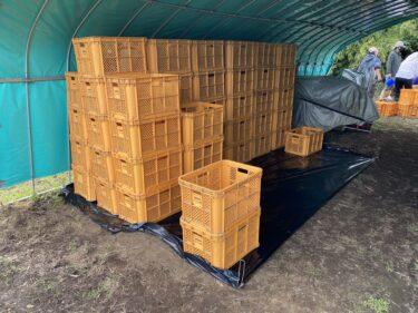 2021年5月28日(金)の作業記録 (玉ねぎに使う収穫カゴの清掃作業、斉藤さん畑の下の畑と上の畑の休憩所の片付け作業、スナックエンドウの撤去作業、その後の茄子の状態は良好)