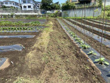 2021年6月1日(火)の作業記録 (小溝畑で玉ねぎの収穫作業、田中さん畑の茄子類支柱立て作業、除草作業)