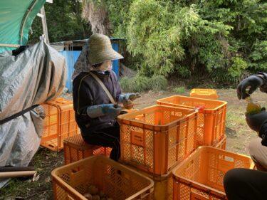 2021年6月3日(木)の作業記録 (クレソン定植作業、セージ定植作業、玉ねぎの根切り葉切り作業)