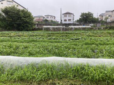 2021年7月2日(金)の作業記録 (収穫作業メイン、鈴木さん畑のビニールハウス内におかひじき播種作業、収穫カゴの清掃等)