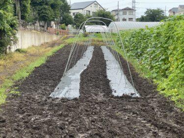 2021年7月12日(月)の作業記録(第三弾キュウリ畝作り、ジャガイモや玉ねぎの選別作業等)