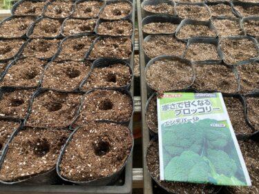 2021年8月12日(木)の作業記録 (ブロッコリーの播種作業、緑茄子の除草と誘引作業、ジャガイモの収穫作業終了箇所をトラクターで耕耘、育苗用防虫ネットをブチルゴムテープで補修)