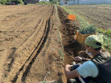 2021年10月5日(火)の作業記録 (玉ねぎの播種作業、小溝畑で長ネギの定植作業)